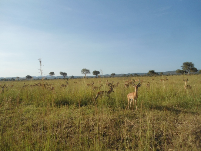 fotos Tanzania 195